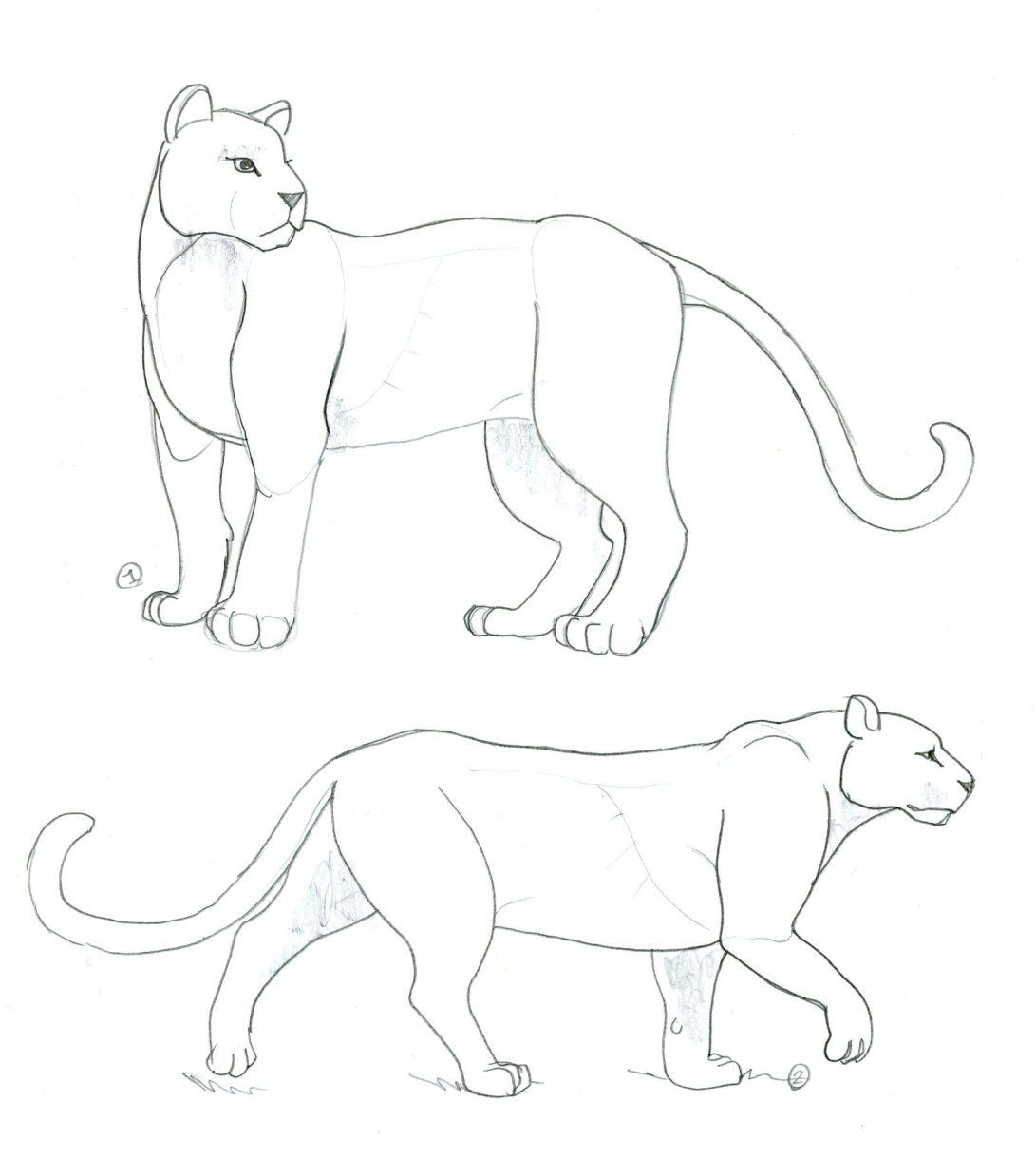 panthère 1 et 2