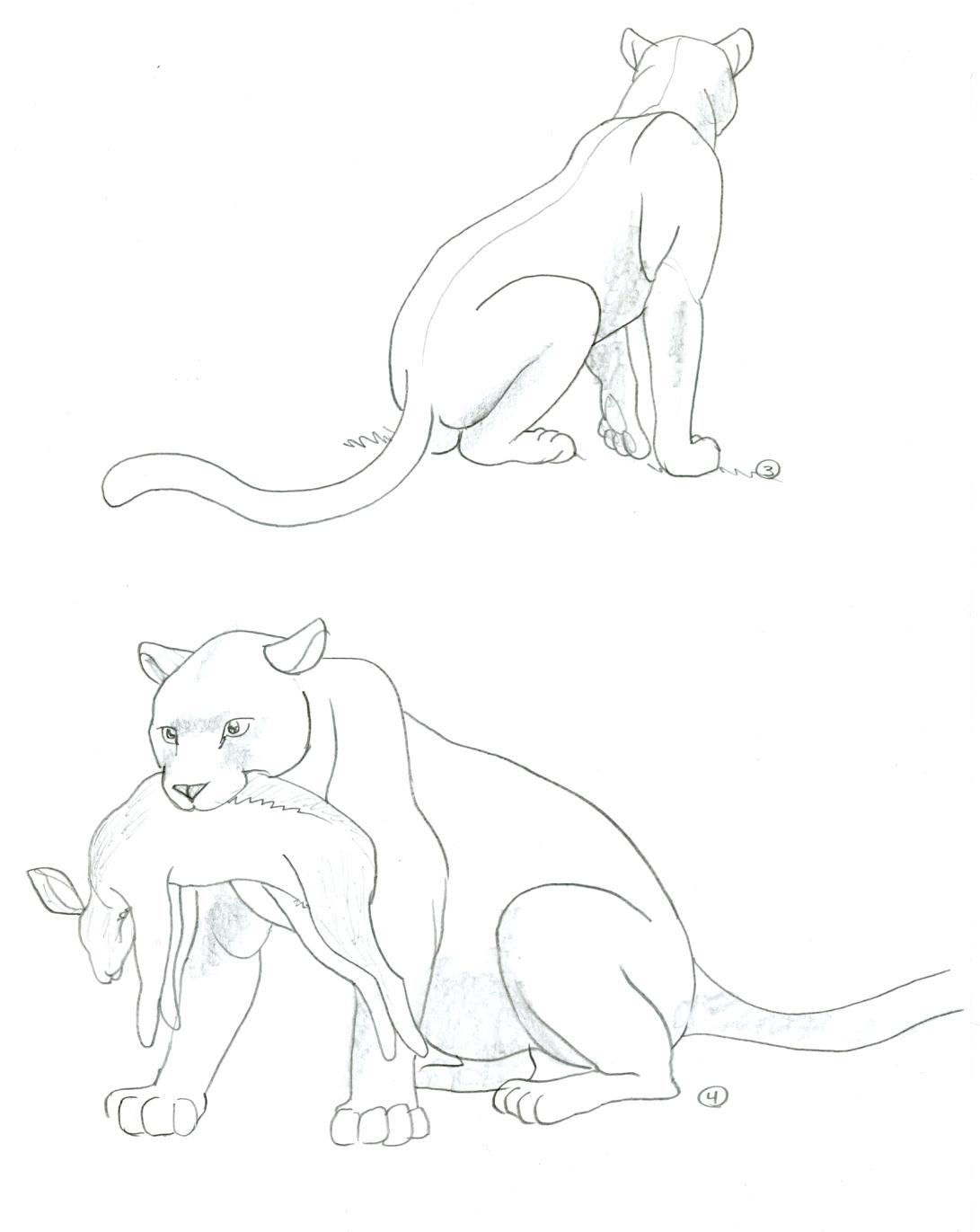 panthère 3 et 4